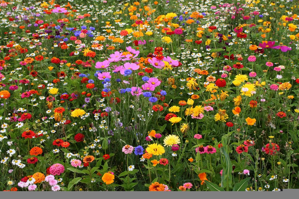 Quot Field Of Flowers Quot Vase