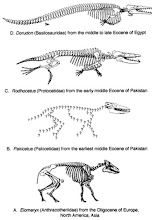 Evolución de las Ballenas