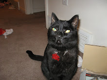 My Handsome Black (Bagira)