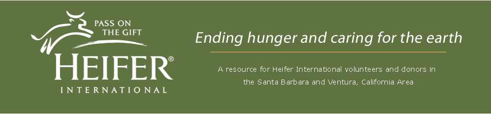 Heifer in Santa Barbara/Ventura, California