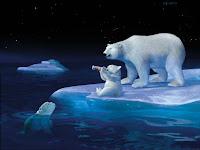 Urso polar wallpaper