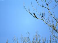 bilder av fåglar