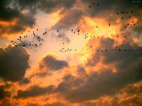 ภาพถ่ายของนก