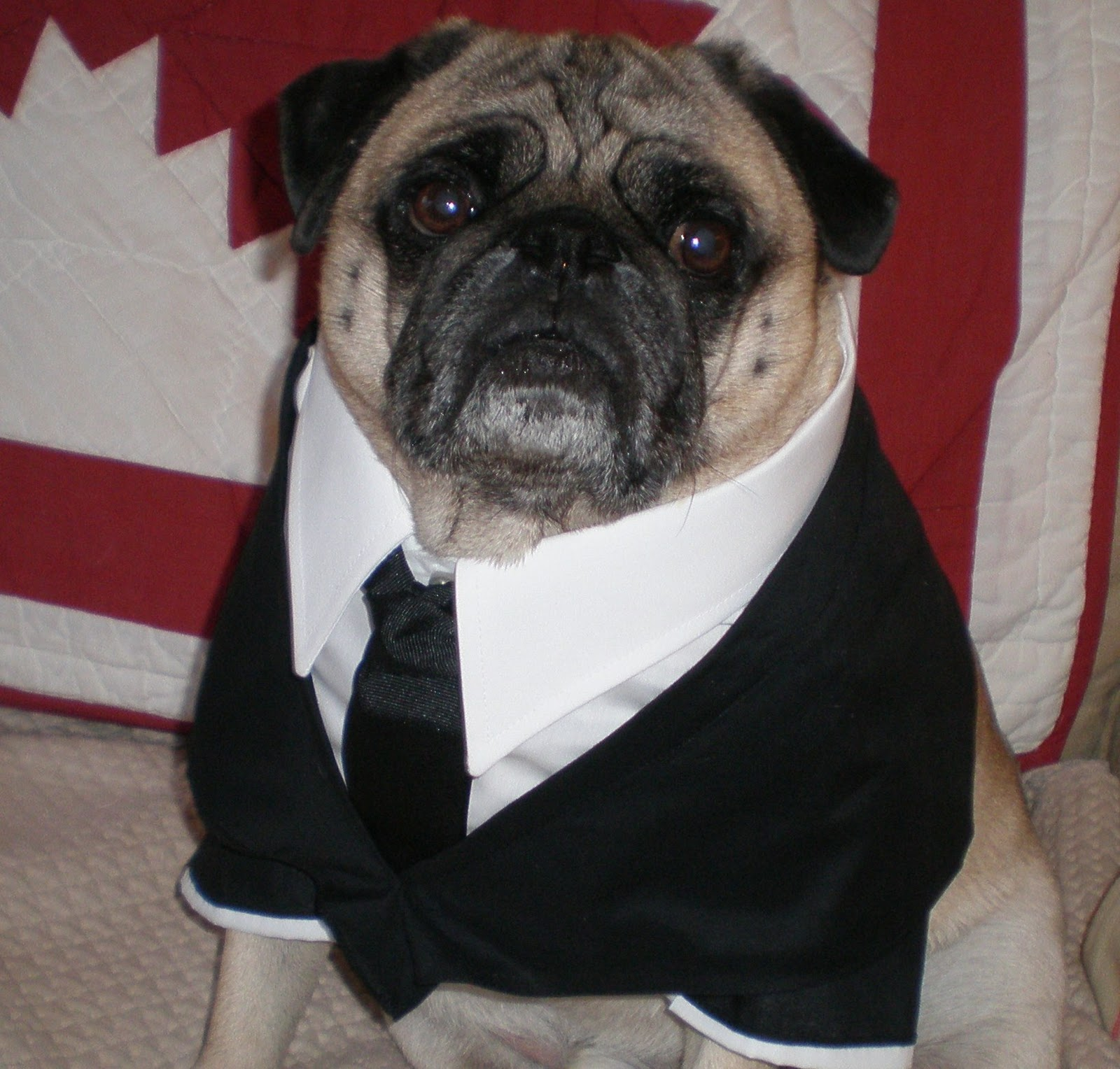 A Pugs Life Porkchop Loves Halloweenmen In Black