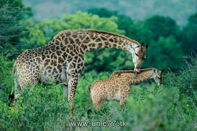 http://2.bp.blogspot.com/_-x7gqq9QJuA/TH4Aqr5reYI/AAAAAAAAQ54/xDWPswe2CVM/s1600/animals_vs_humans_10.jpg