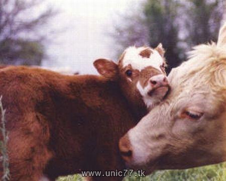 http://2.bp.blogspot.com/_-x7gqq9QJuA/TH4Bkc4UsOI/AAAAAAAAQ6w/LJPktGrUtPU/s1600/animals_vs_humans_17.jpg