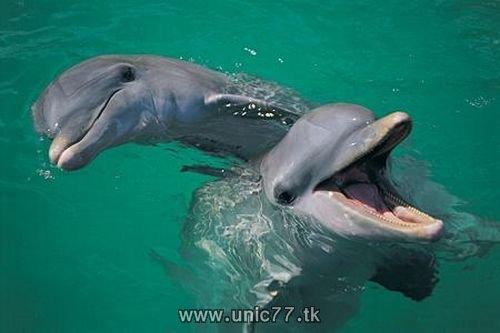 http://2.bp.blogspot.com/_-x7gqq9QJuA/TH4BksD3bjI/AAAAAAAAQ64/C9Aqv2TnFPk/s1600/animals_vs_humans_18.jpg