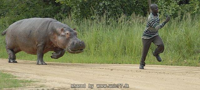 http://2.bp.blogspot.com/_-x7gqq9QJuA/TICBHhDJp9I/AAAAAAAAR1Y/pgHUtkljwo8/s1600/angry_hippo_04.jpg