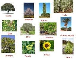 Las Planta Es Vida Clasificacion De Las Plantas Segun Su