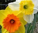 [blooms.jpg]