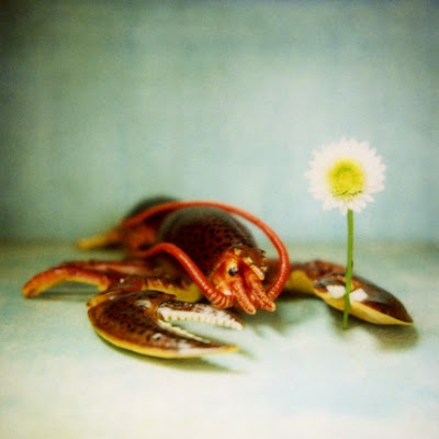 esoule lobster with flower fine art photograph