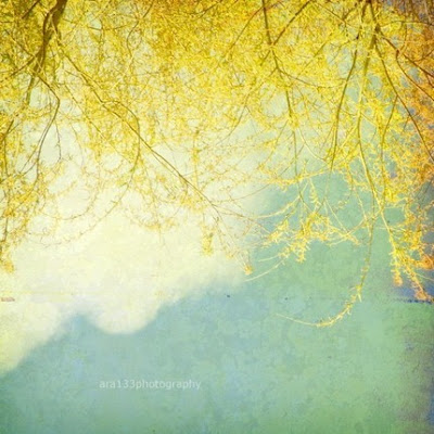 yellow, aqua, turquoise,blue, willow, print, fine art photography