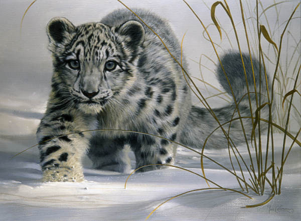 This is the greatest list of interesting facts about snow leopards on the