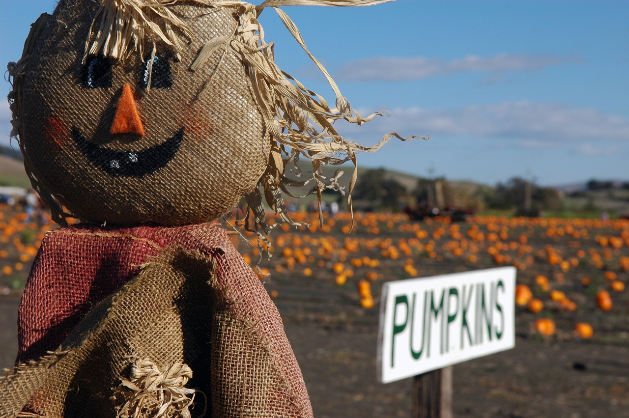The Haunted Graveyard Ny likewise How To Survive Haunted House also 139822763403827548 furthermore Lady Gagas Outrageous Brit Awards Outfit Inspires Desperate Farmers Scarecrow also French Farmhouse. on old scary farms