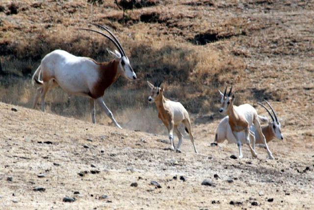 oklahoma hunting ranch OK hunt