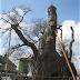 The Oak Chapel of Allouville-Bellefosse