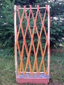 element décoratif en osier(varieté ALBA)