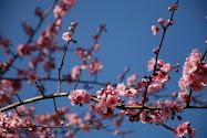 Våren i Rom