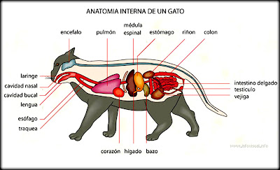 external image gatos.jpg