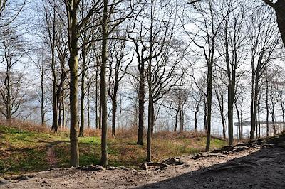 Forest overlooking the Aarhus bay