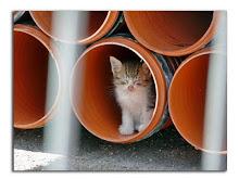 soy un gato callejero,gracias por acordarte de mi