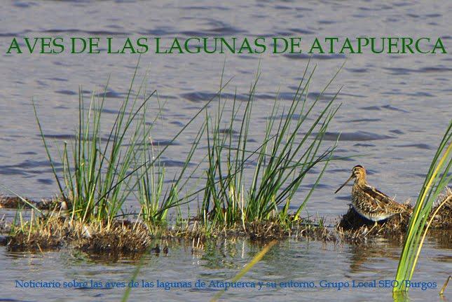 Aves de las Lagunas de Atapuerca