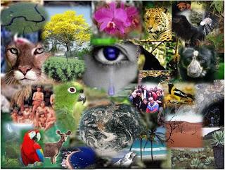 http://2.bp.blogspot.com/_07HMZnlBm7U/S_eyvaWD9iI/AAAAAAAABAA/03pt8GPTm0M/s1600/biodiversidad3.jpg