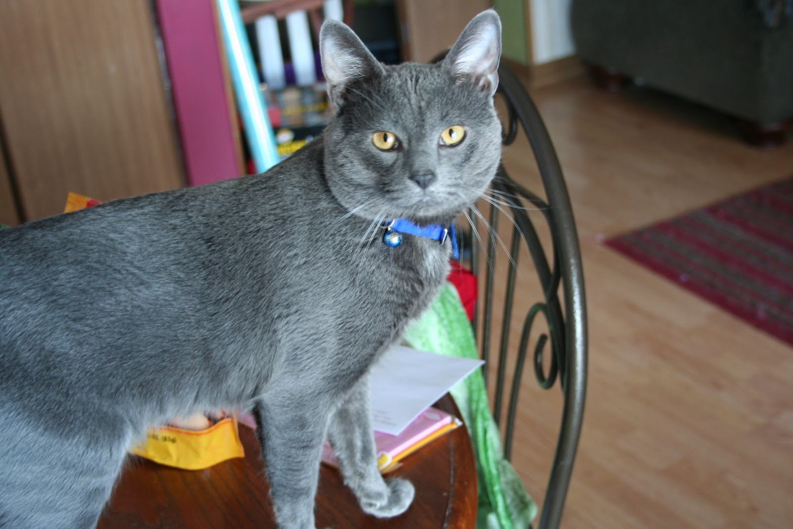 So That s Why Dmitry the Russian Blue Retriever