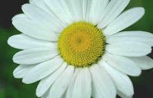 La Flor Más Dulce De Mi Jardin ~