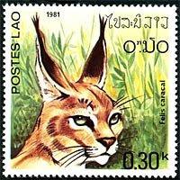 Serie gatos salvajes de Laos: felis caracal (348)