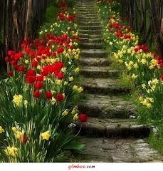 Escada da Vida...