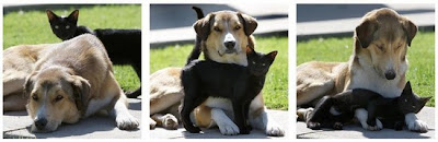 cães gatos cachorros preto
