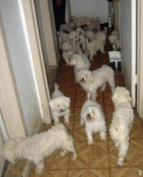 animal hoarding: