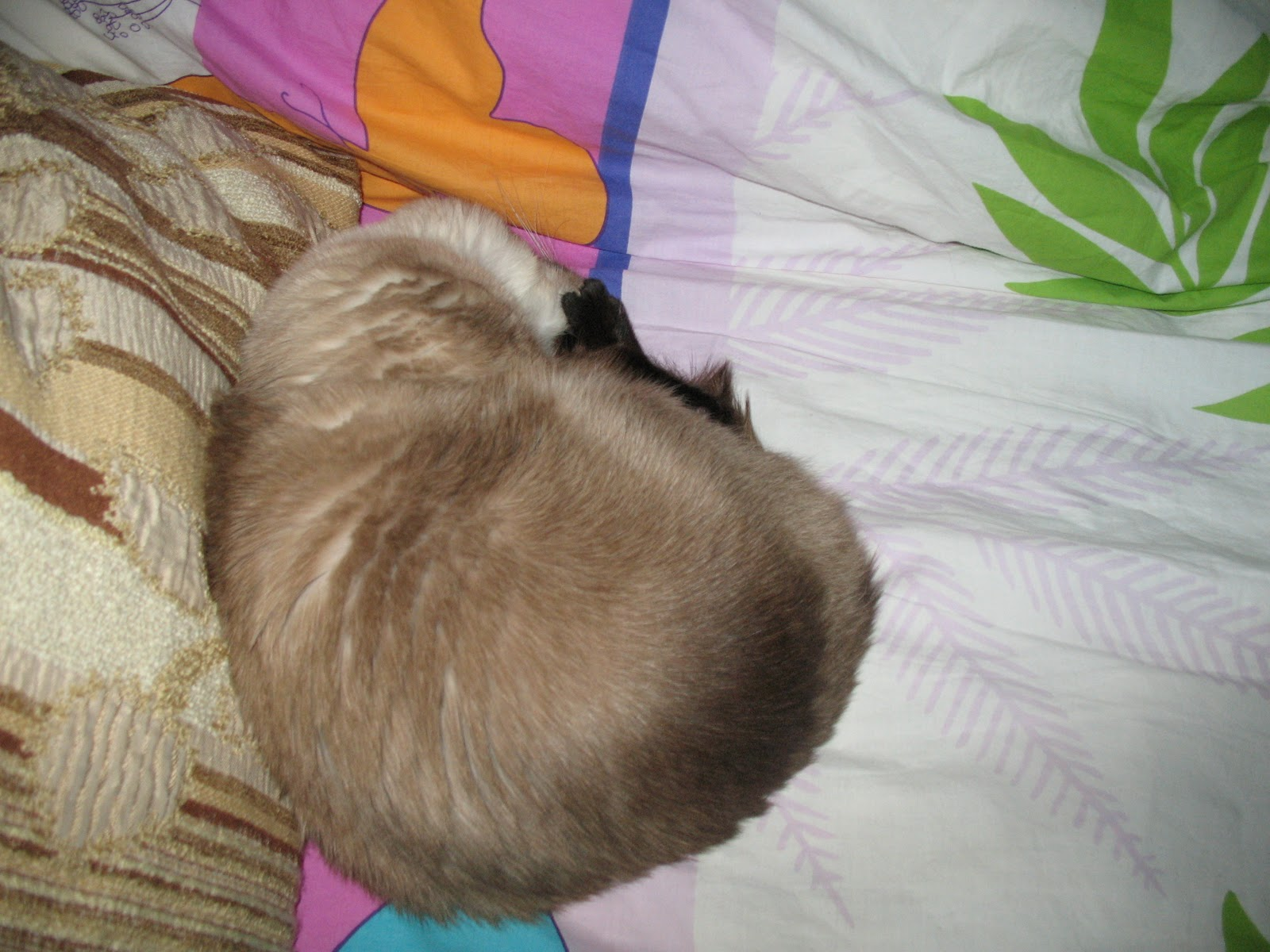 Связала спящей подруге руки и 1 фотография