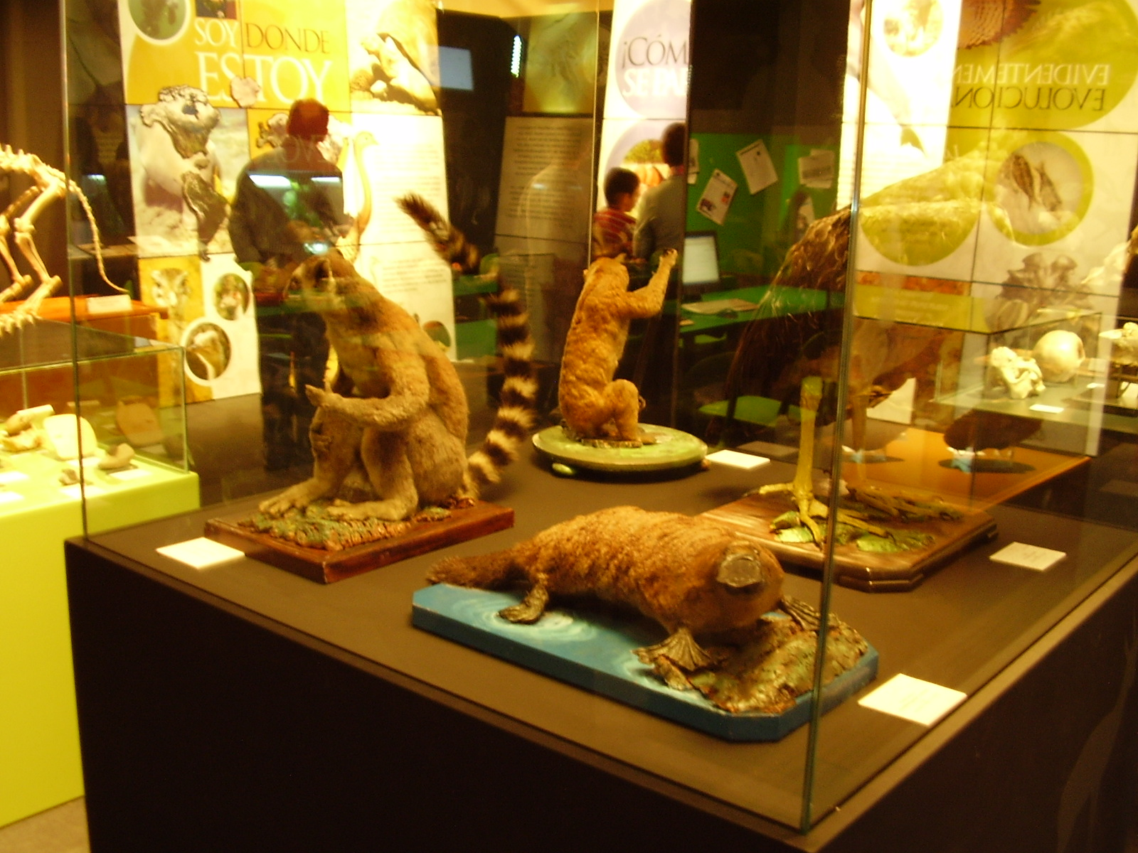 museo ciencia murcia: