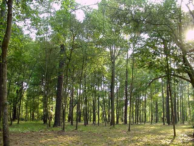 external image trees%2Bin%2Bforest.jpg