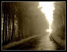 El camino hacia la luz...