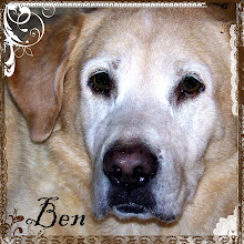 BEN - My Beloved Studio Dog