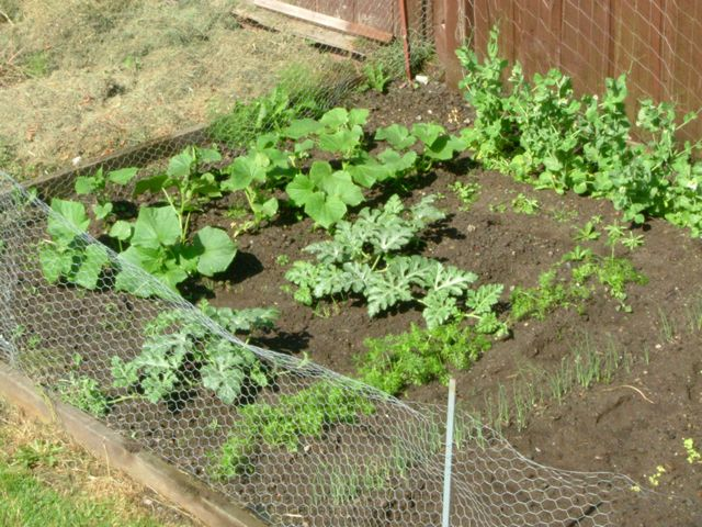 our own vegetable garden