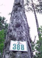 l'arbre BA cachait la forêt baCHch