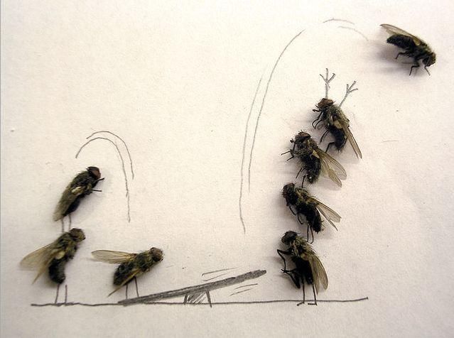 [mosca4.aspx]