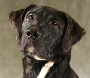 Https Www Rocketdogrescue Org Dog Jacam Status For Adoption