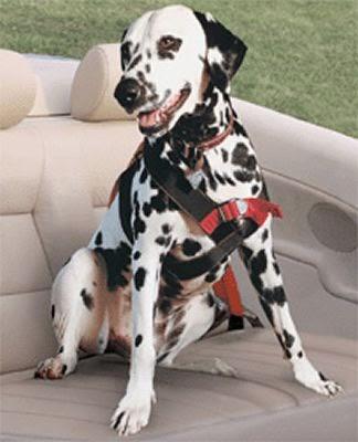 Ruff Dog Training