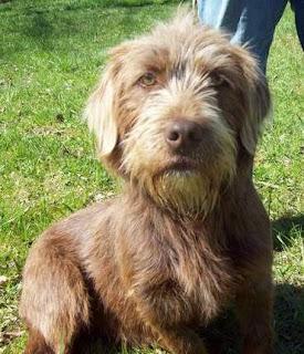 Phoenix Dog Rescue Warrington