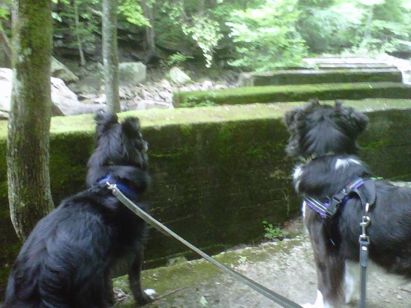 Dog Days Agility Halkyn