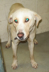1/21/10 Nicholas Animal Shelter Summerville WV