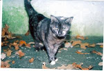 3/22/10  These beautiful cats will be euthed 3/24/10/ Please Help.