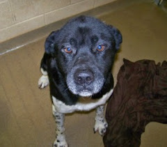 4/3/10 Urgent Out of Time Dogs Beagle Mix, Akita Mix Mercer Humane  Society WV