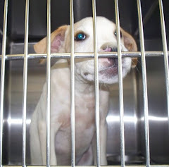 "8/4/10 "" Winder, GA~STILL NOT WANTED~Little Ivy~3-4 Month Old Lab Mix Baby Needing Someone to Watch"