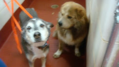 "10/29/10 ""Please can anyone take in these two angels ?– the owner was put in hospice"" GA"